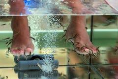 De schoonmakende voeten die van de vissenpedicure huid eten Stock Afbeelding