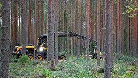 De Schorpioenkoning Working van de Ponssemaaimachine in Bos royalty-vrije stock fotografie