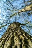 De schors van de boom die met groen mos wordt behandeld royalty-vrije stock foto