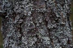De schors van de boom met mos wordt behandeld dat royalty-vrije stock afbeeldingen