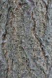 De schors van de abrikozenboom royalty-vrije stock fotografie