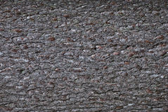 De schors van de boom Stock Foto