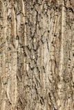 De schors van de boom Royalty-vrije Stock Afbeeldingen
