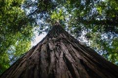 De schors van de boom royalty-vrije stock afbeelding