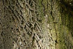 De schors van de boom Stock Foto's
