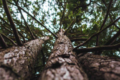 De schors van de boom Royalty-vrije Stock Foto's