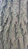 De schors van de boom stock afbeeldingen