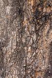 De schors van de boom gedetailleerd filling het kader het vullen van het kader royalty-vrije stock foto