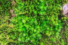 De schors van de boom met mos stock afbeeldingen