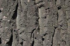 De schors van de boom Oppervlakte van de boomboomstam Royalty-vrije Stock Foto's