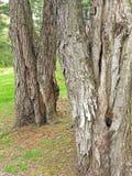 De schors van de boomboomstam royalty-vrije stock afbeeldingen