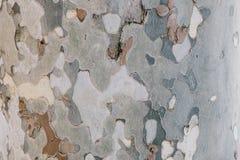 De schors van de camouflageboom - natuurlijke textuur Royalty-vrije Stock Fotografie