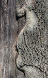De schors van de fragmentboom Stock Fotografie