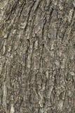 De schors van de lindeboom stock fotografie