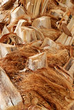 De schors van de palm Royalty-vrije Stock Foto