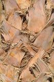 De schors van de palm, textuur, achtergrond Royalty-vrije Stock Afbeelding