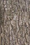 De schors van de perenboom royalty-vrije stock fotografie