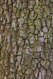 De schors van de perenboom Royalty-vrije Stock Afbeelding