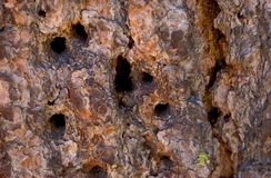 De Schors van de pijnboom stock foto