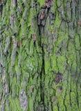 De schors van een boom in het mos stock fotografie