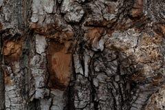 De schors van een oude boom Stock Afbeelding