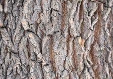 De schors van een oude boom Lariksschors royalty-vrije stock afbeelding