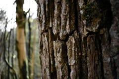 De schors van een oude boom royalty-vrije stock afbeeldingen