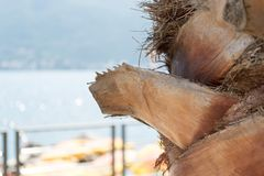 De schors van de palmclose-up Stock Fotografie