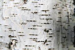 De schorsachtergrond van de berkboom Stock Afbeeldingen