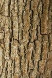 De schorsachtergrond van de boom. stock fotografie