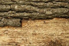 De schorsachtergrond van de boom. royalty-vrije stock afbeeldingen