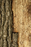 De schorsachtergrond van de boom. stock afbeeldingen