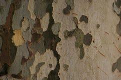 De schorsachtergrond van de sycomoor Stock Fotografie