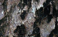 De schorsachtergrondafbeelding van de Deadwoodboom royalty-vrije stock foto's