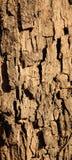 De schorsbanner van de boom Stock Foto's