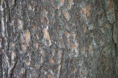 De schorsclose-up van de textuurpijnboom als natuurlijke materiële bruin Stock Foto