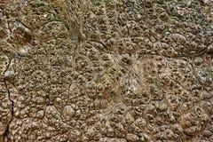 De schorstextuur van de boom Abstracte Houten Achtergrond stock foto's