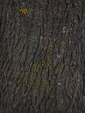 De schorstextuur van de boom Achtergrond van schors van oude eik Royalty-vrije Stock Foto