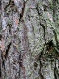 De schorstextuur van de boom Stock Foto's