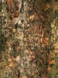 De schorstextuur van de boom Stock Afbeeldingen