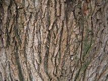De schorstextuur van de boom Stock Fotografie