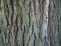 De schorstextuur van de boom Stock Afbeelding