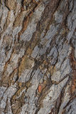 De schorstextuur van de boom cork Royalty-vrije Stock Fotografie