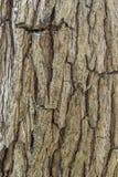 De schorstextuur van de boom cork Stock Afbeelding
