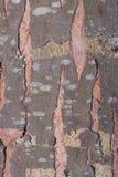 De schorstextuur van de boom cork Royalty-vrije Stock Afbeeldingen