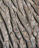 De schorstextuur van de boom - detail Stock Fotografie