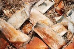 De schorstextuur van de palm Stock Afbeelding