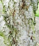 De schorstextuur van de Perzikboom stock fotografie