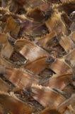 De schorstextuur van Palmtree Royalty-vrije Stock Fotografie