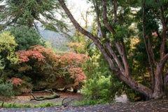 De Schotse herfst Stock Afbeeldingen